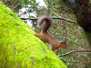 See how the squirrel can place his rear feet to go down trees.(C) Joanna Dailey