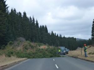 A fallen tree blocks the road near Kielder village. (c) Joanna Dailey