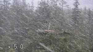 Snow sweeps across in front of Nest 1 (c) Forestry Commission