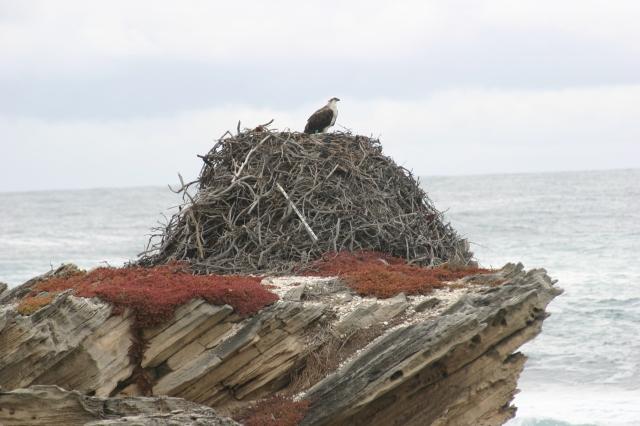 Salmon Point, Rottnest Island WA (c) Bev Naismith