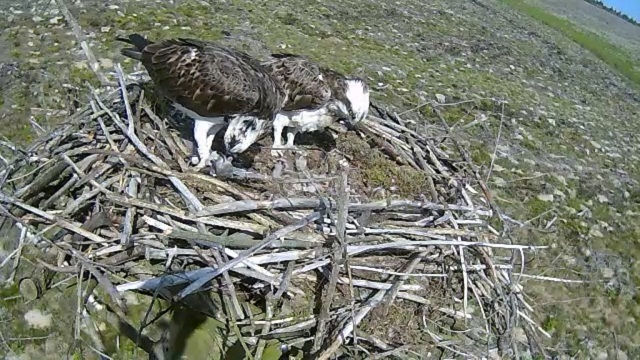 An early feed for the family (c0 Forestry Commission
