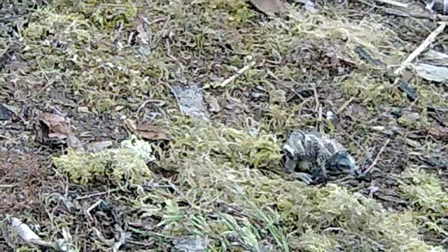 Nest 1 chick - big foot! (c) Forestry Commission