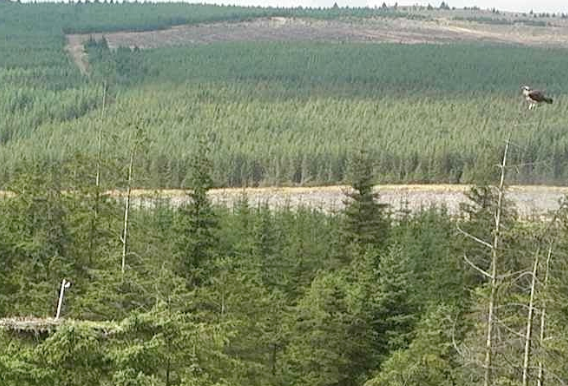 is this Blue 6H? Probably (c) Forestry Commission England
