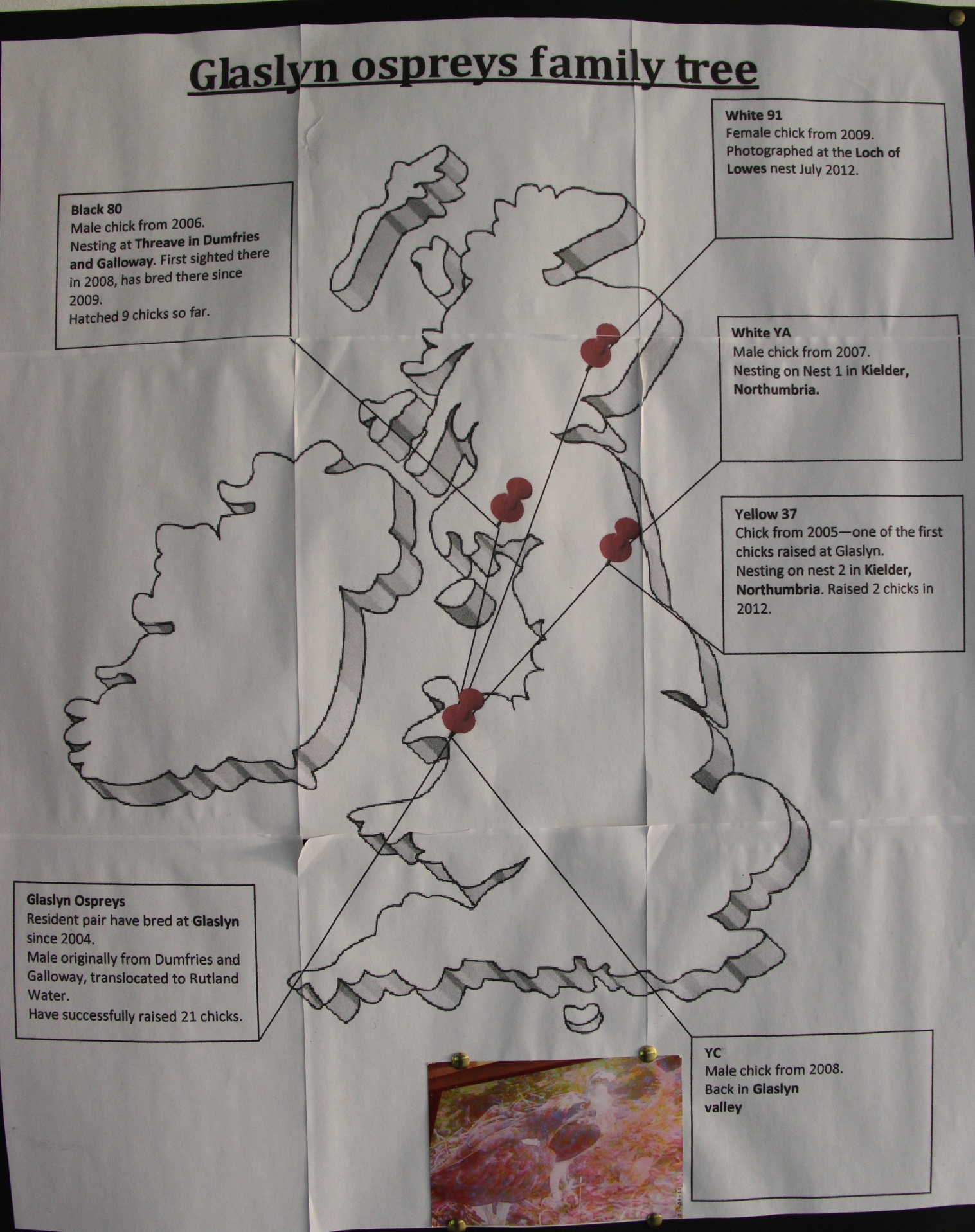 A Visit To Meet Mum And Dad Kielder Ospreys Osprey Engine Diagram The Glaslyn Family Map C Project