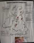 The Glaslyn Family Map (c) Glaslyn Osprey Project