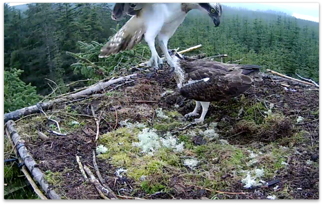 Nice mossy landing area! (c) Forestry Commission England