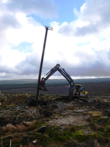 The new nest pole being erected over winter (c) Forestry Commission England