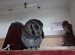 Owls Birds of Prey Centre (c) Janis Warren