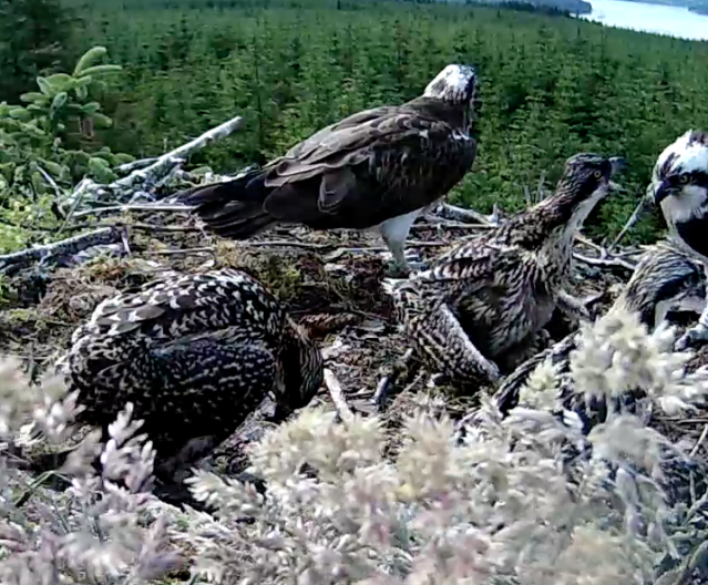 It's MINE! (c) Forestry Commission England