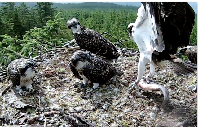 The family are interested in YA's catch! (c) Forestry Commission England