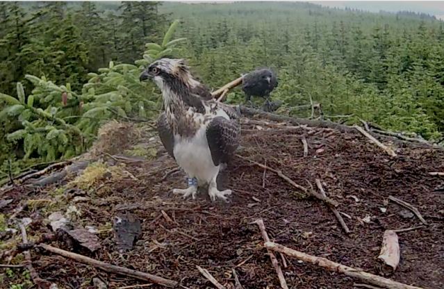 Look behind you! (c) Forestry Commission England