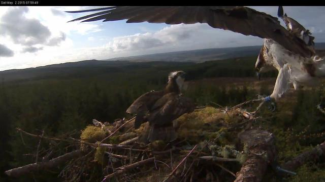 Blue EE lands on Nest 3 (c) Forestry Commission England