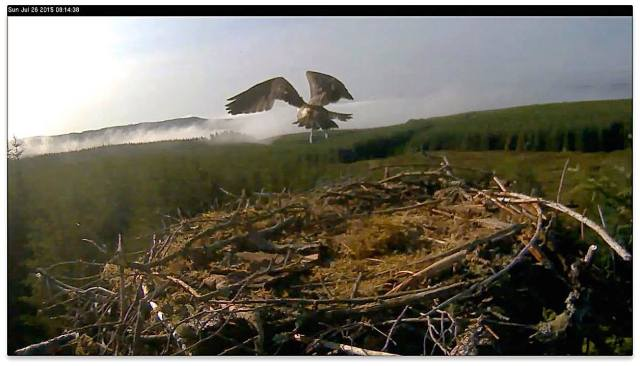 VN flies away (c) Forestry Commission England