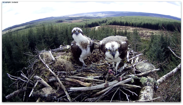 What is in the air? (c) Forestry Commission England