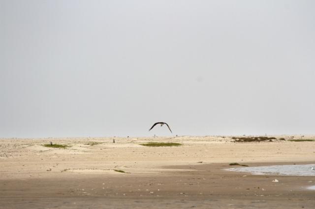 Beyond the Osprey the sand descends to the ocean as a steep shelf (c) Joanna Dailey