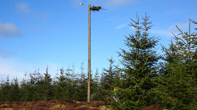A view of the new platform with nestcam (c) Joanna Dailey
