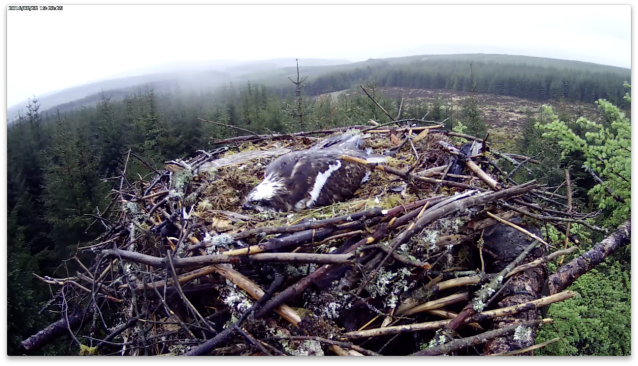 19.23 a wet mother (c) Forestry Commission England