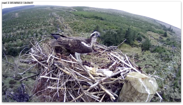 Mrs YA visits Nest 2 (c) Forestry Commission England