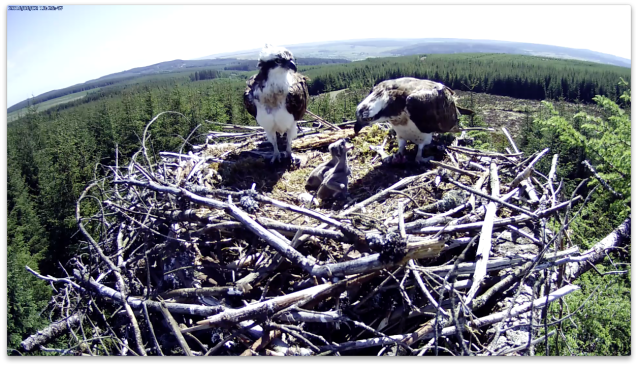Busy feeding... (c) Forestry Commission England