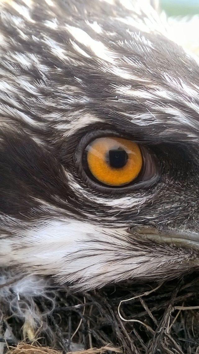 I've got my eye on you! (c) Paul Pickett