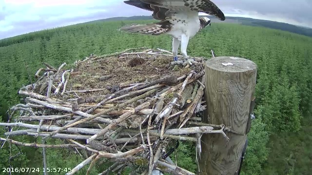 Blue AS6 on a flying visit (c) Forestry Commission England