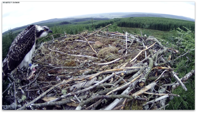 VR is not to be seen (c) Forestry Commission England