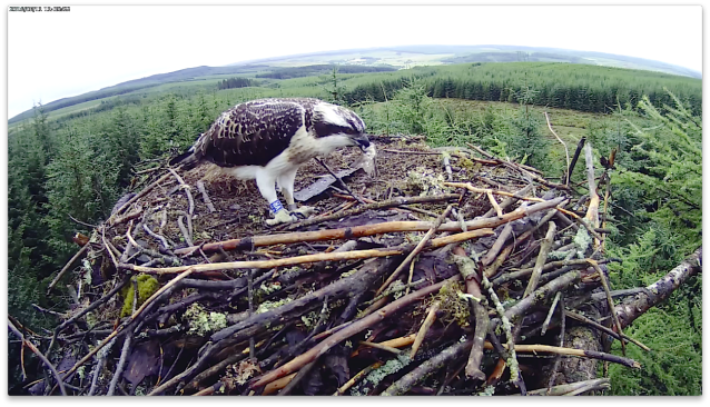 VR finishes his meal (c) Forestry Commission England