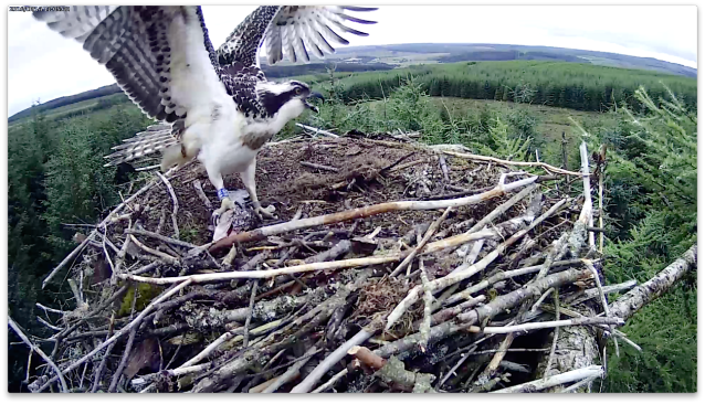 ... and this is VR's! (c) Forestry Commission England
