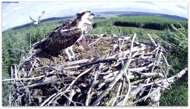 VR flies past the nest (c) Forestry Commission England