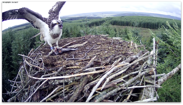 This one is definitely VH's! (c) Forestry Commission England