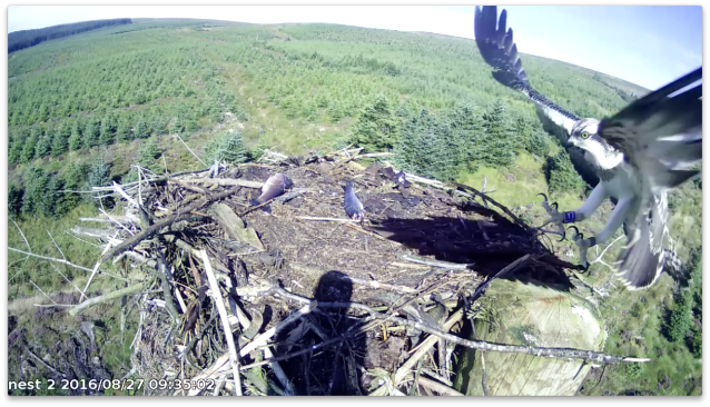 Y7 zooms in! (c) Forestry Commission England