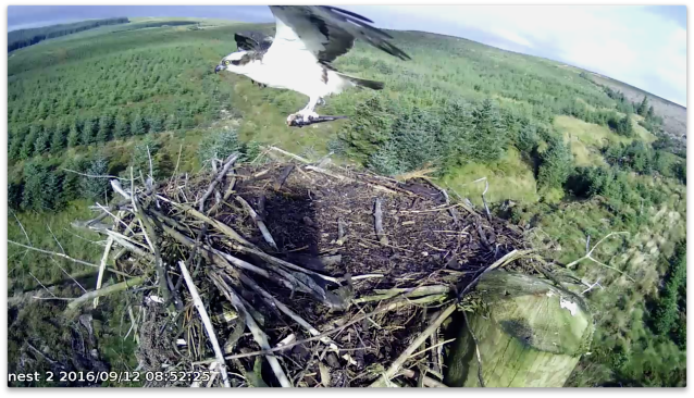 ... and eventually flies with the fish (c) Forestry Commission England