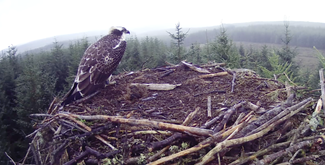 18.40 Final view of VR at Nest 3 in 2016 (c) Forestry Commission England