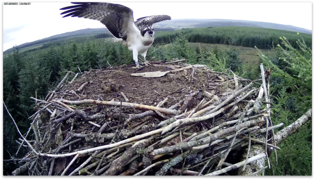 Where's FOOD??? (c) Forestry Commission England